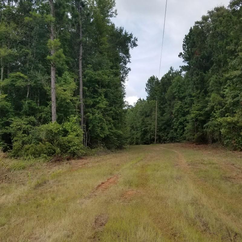 Claiborne Parish Land For Sale